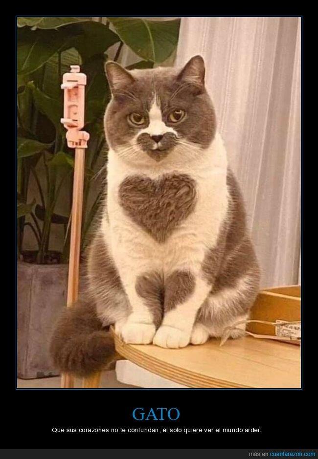 corazones,gato,wtf