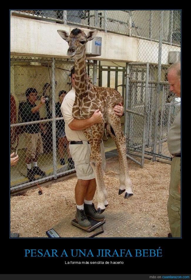 bebé,jirafa,pesar
