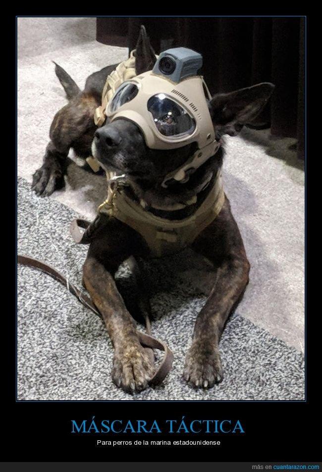 marina,máscara táctica,perros