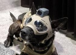 Enlace a Perro de combate
