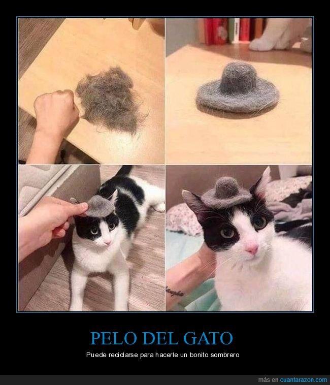 gato,pelo,sombrero