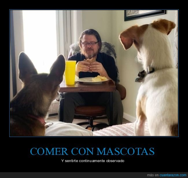 comiendo,mascotas,mirando