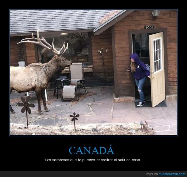 canadá,casa,ciervo,wtf
