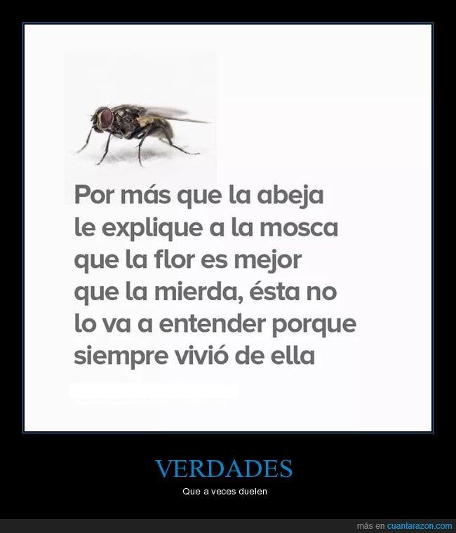 abeja,flor,mejor,mierda,mosca