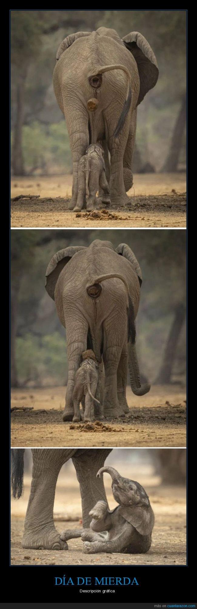 elefante,fails,mierda