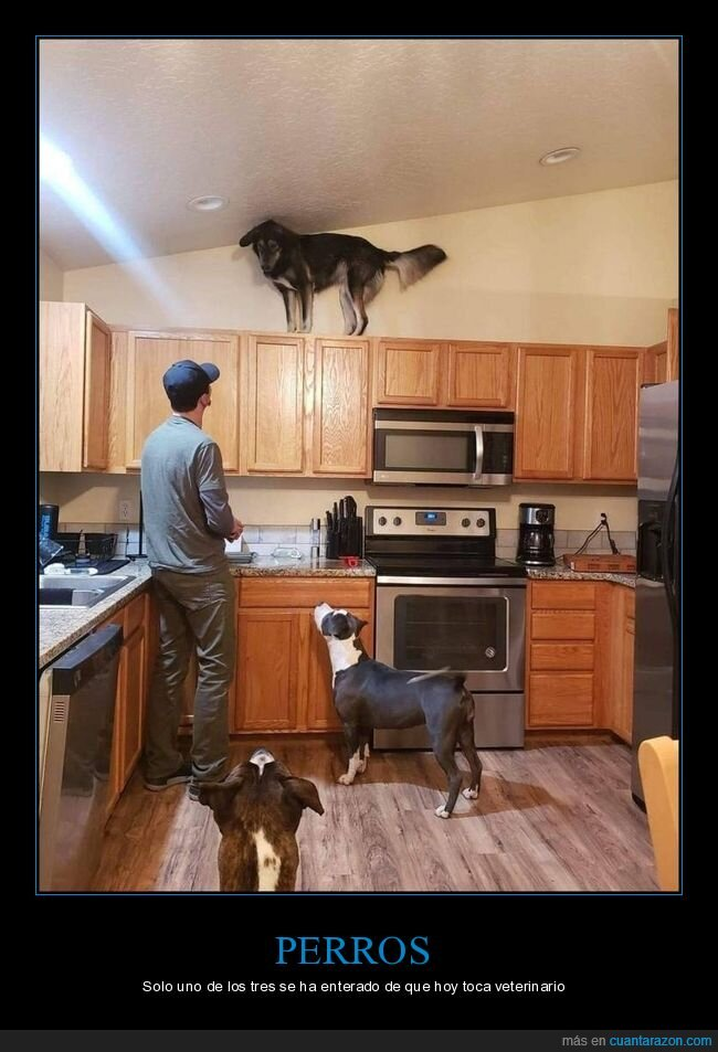 cocina,mueble,perro,subido,wtf