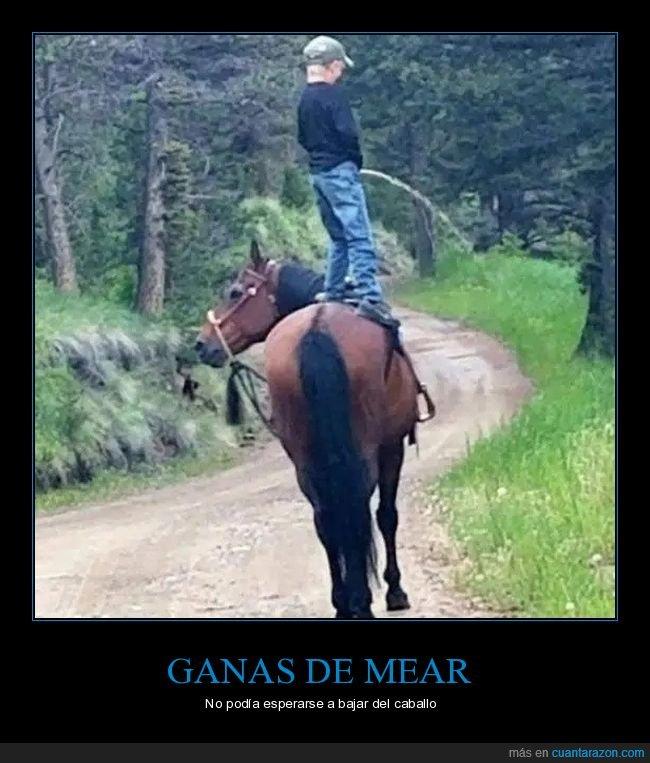 caballo,meando,niño,wtf
