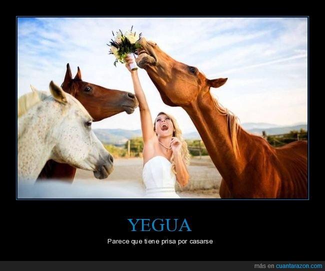 caballo,novia,ramo