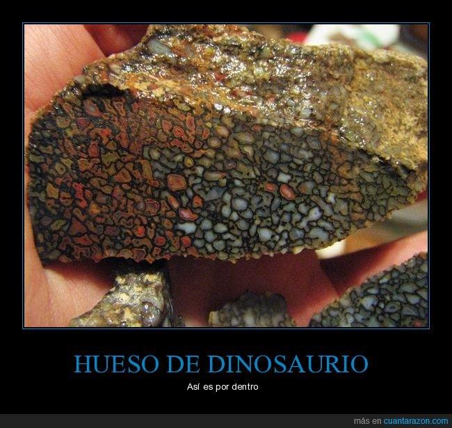 curiosidades,dinosaurio,hueso,interior
