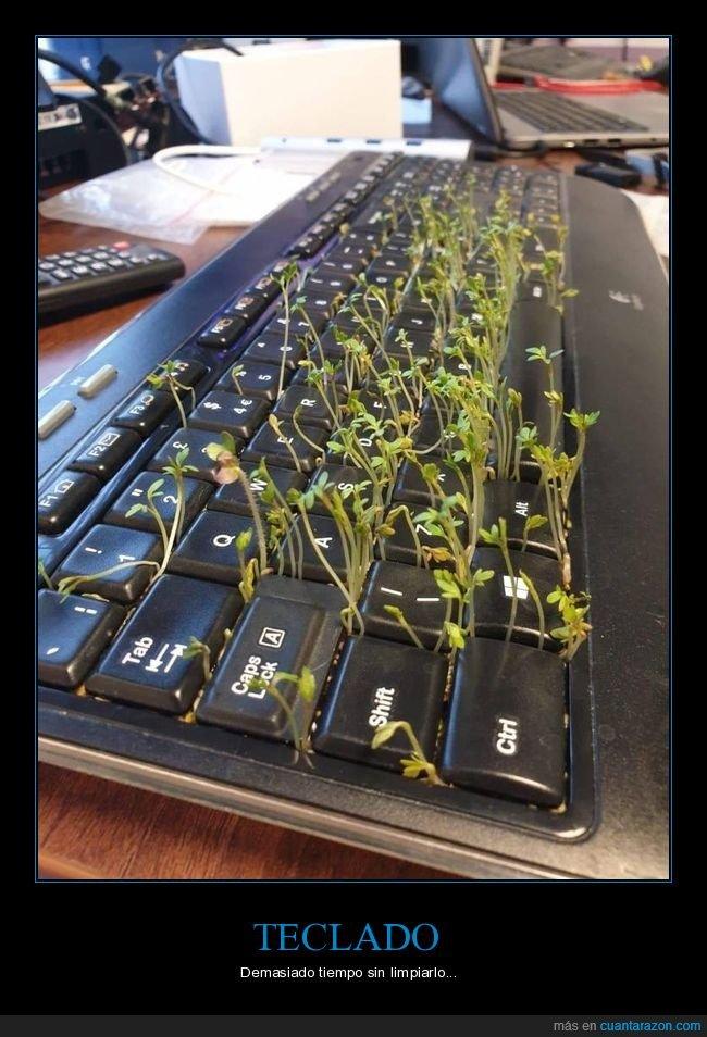 creciendo,limpiar,plantas,teclado,wtf