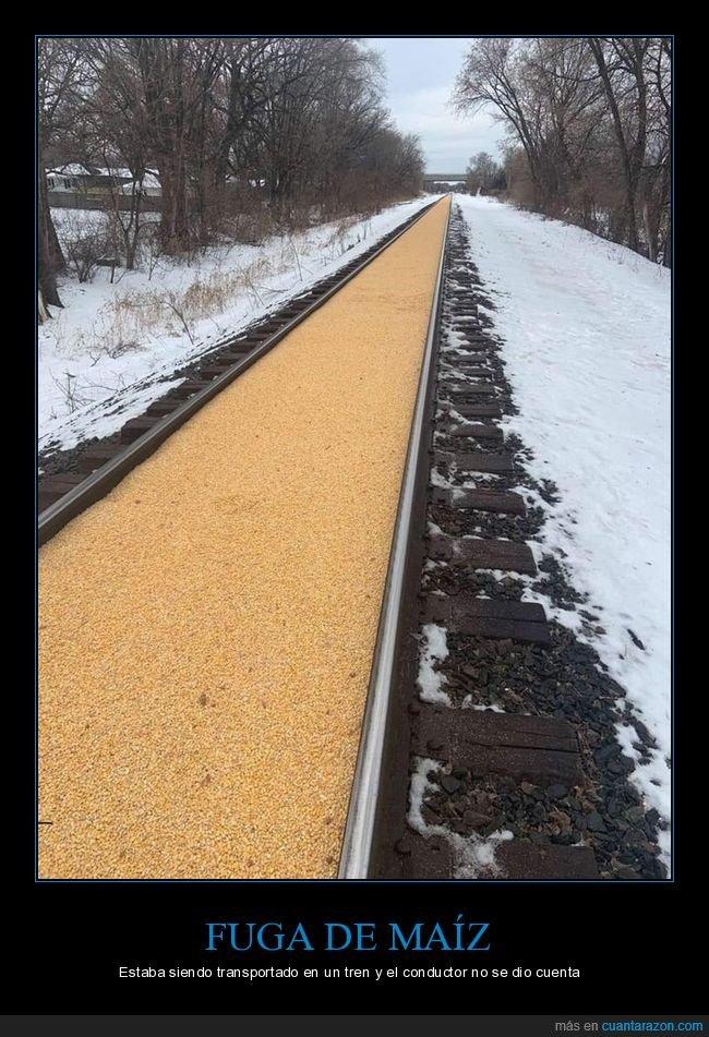 fuga,maíz,tren,vía