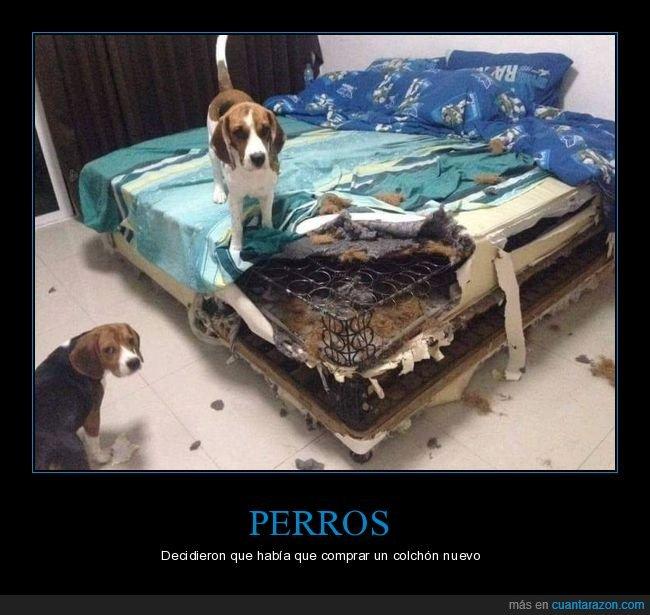 cama,colchón,fails,perros