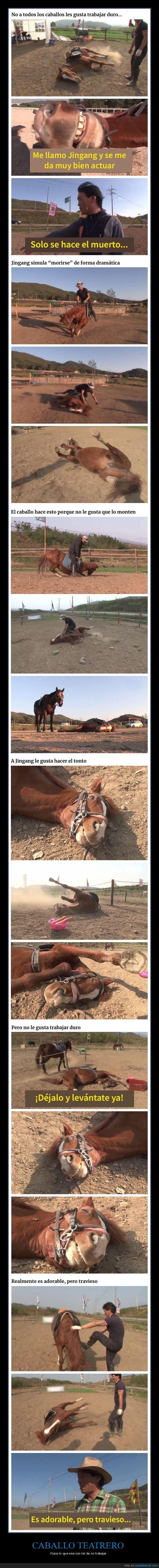 caballo,fingir,montar,morirse