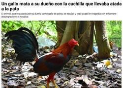 Enlace a El gallo vengador