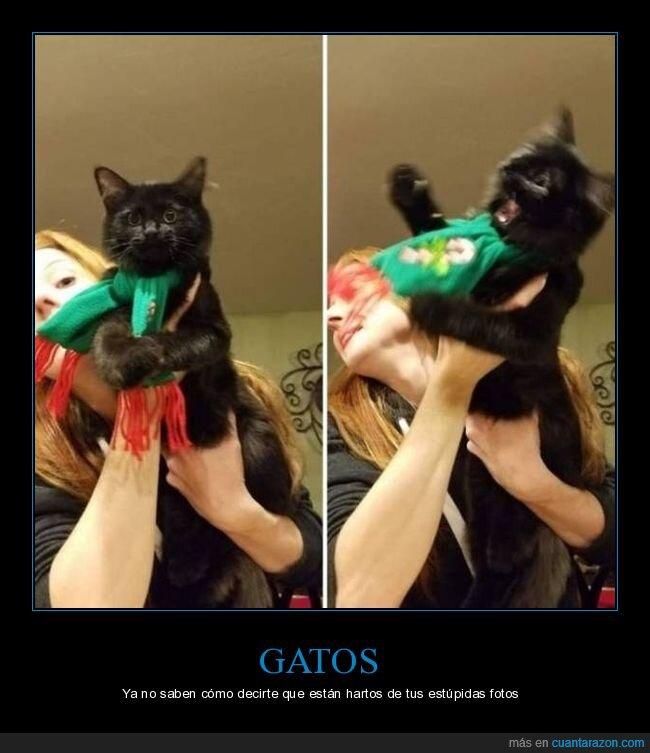 fails,foto,gato