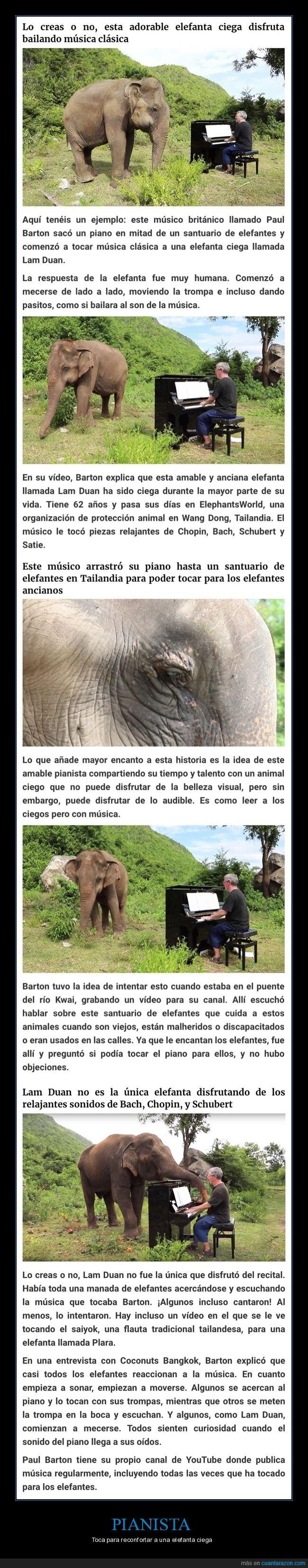 ciego,elefante,pianista,piano