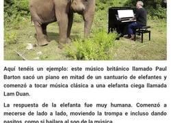 Enlace a Este pianista comenzó a tocar para reconfortar a una elefanta ciega, y esta comenzó a bailar