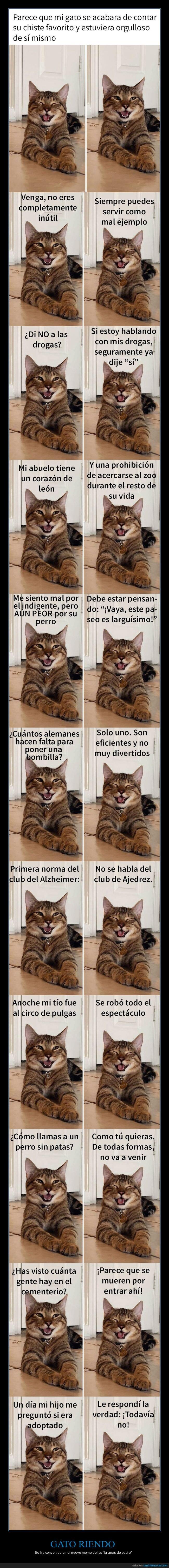 bromas de padre,gato,meme,riendo