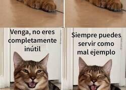 """Enlace a Esta mujer subió fotos de su gato riendo, y se ha convertido en el nuevo meme de las """"bromas de padre"""""""