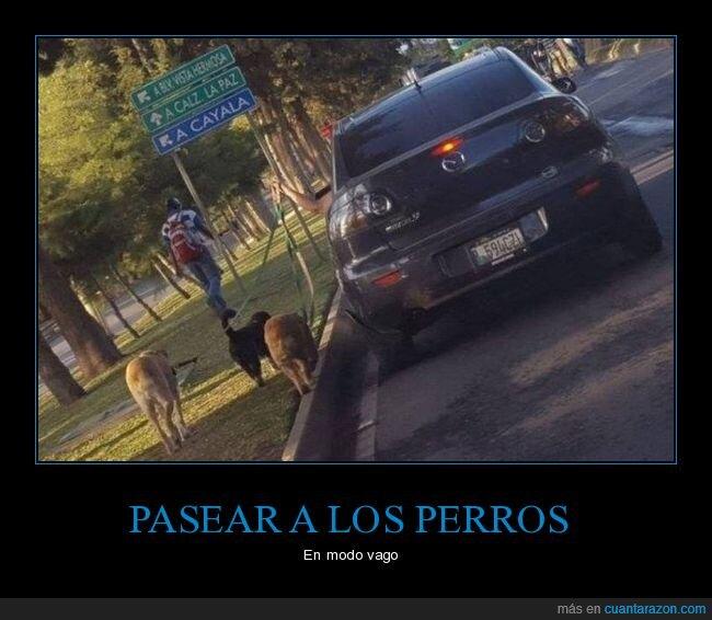coche,paseando,perros