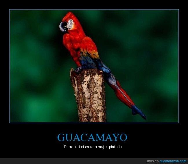 guacamayo,mujer,pintada