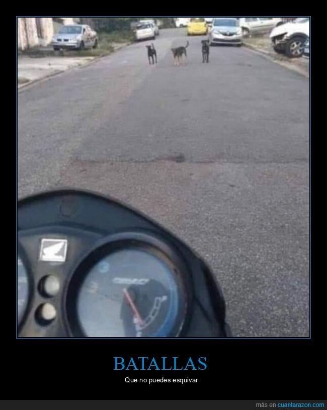batalla,calle,desafiar,perros