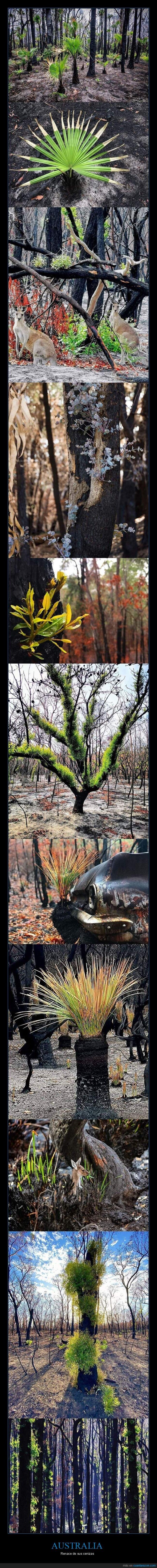 australia,brotes verdes,incendios,naturaleza