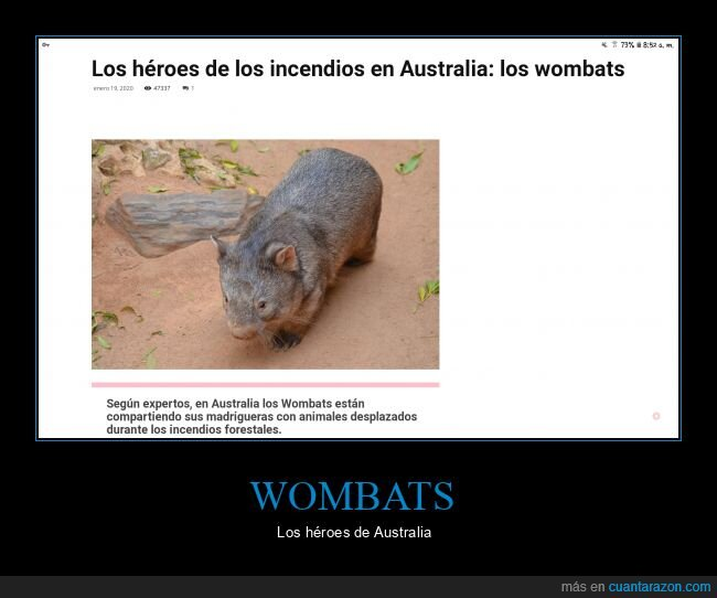 animales,Australia,héroes,Incendios,noticia