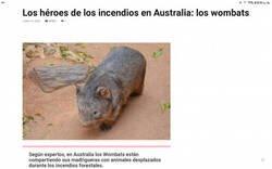 Enlace a El compañerismo de los wombats