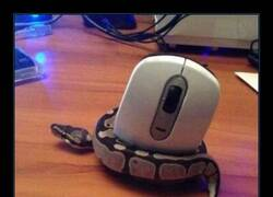 Enlace a Ahora dile que no es un ratón