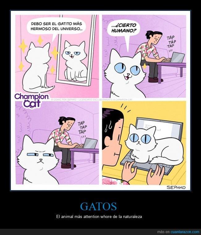 gato,llamar la atención,ordenador,teclado