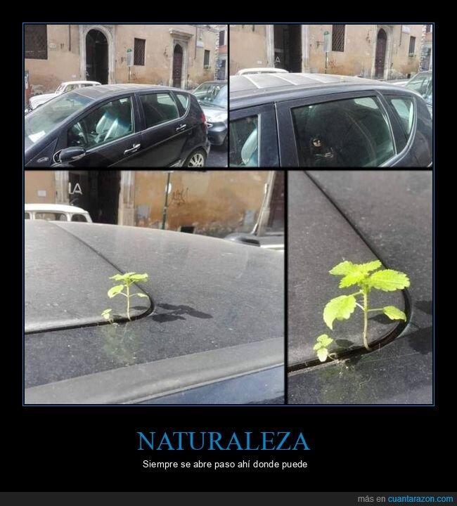coche,hierba,naturaleza,techo
