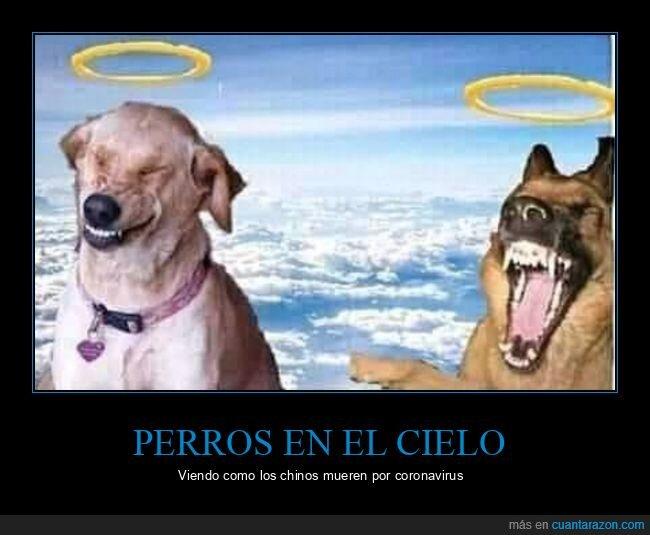 ángeles,cielo,perros