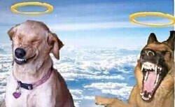 Enlace a Mientras tanto, los perros en el cielo