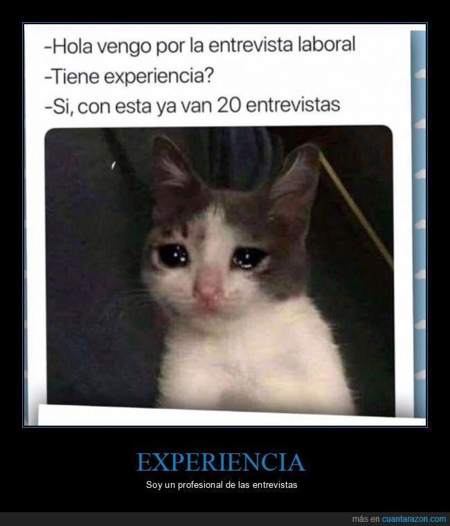 experiencia,gato,llorar,trabajo