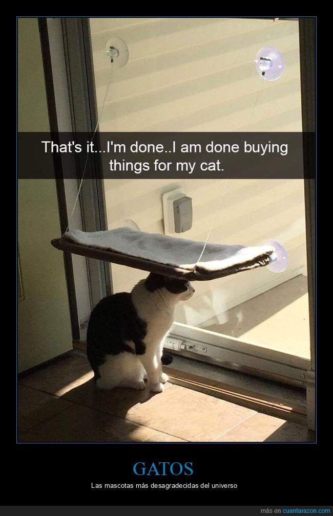 gatos,regalos,usar