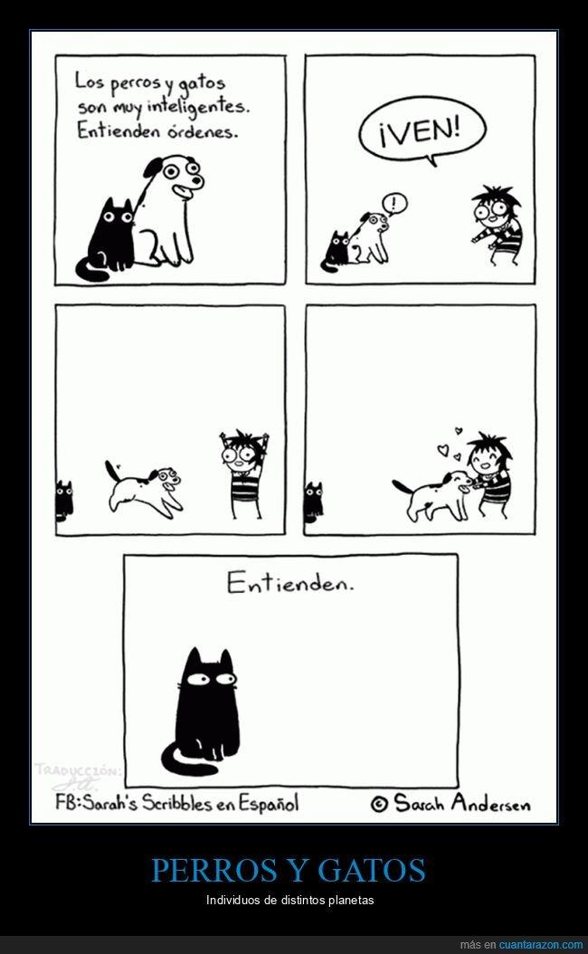 entender,gatos,órdenes,perros
