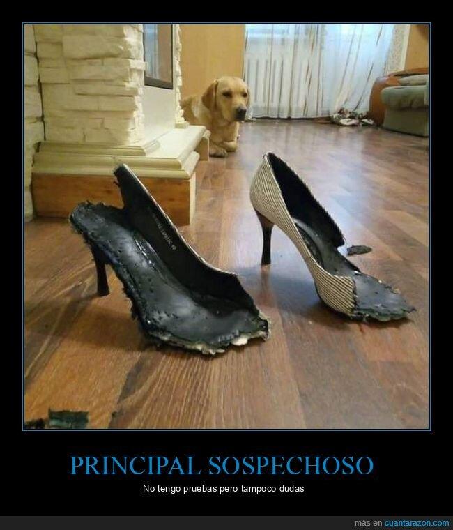 morder,perro,romper,tacón,zapatos