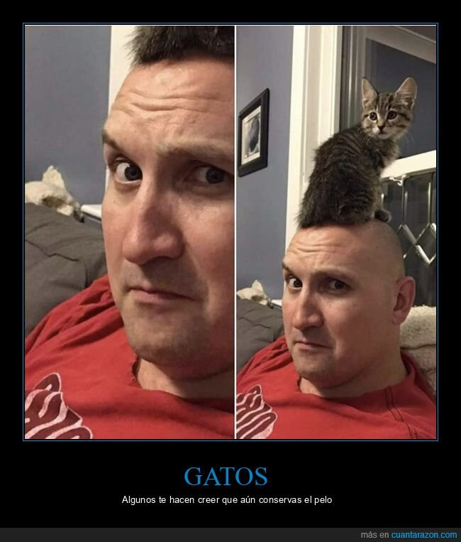 cabeza,gato,pelo