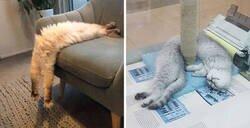 Enlace a La gente comparte fotos de sus gatos largos, que parecen estirarse hasta el infinito