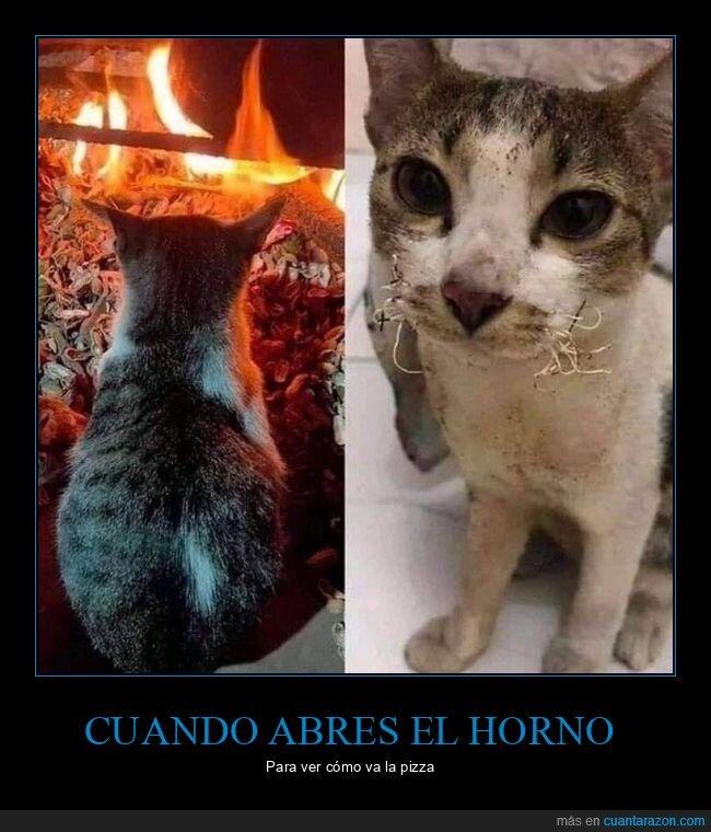 bigotes,fuego,gato