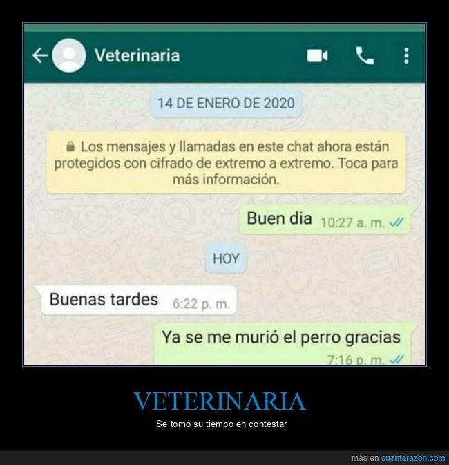 muerto,perro,responder,veterinaria,whatsapp