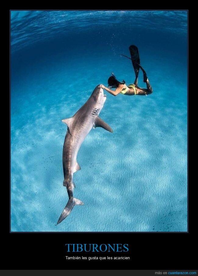 acariciando,buceando,mar,tiburón
