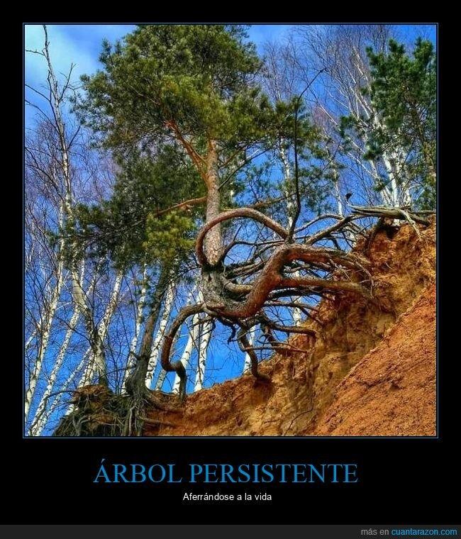 árbol,raíces,tierra