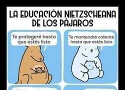 Enlace a Distintos modelos educativos en el reino animal