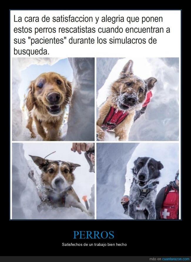 caras,perros,rescate,satisfacción,simulacros