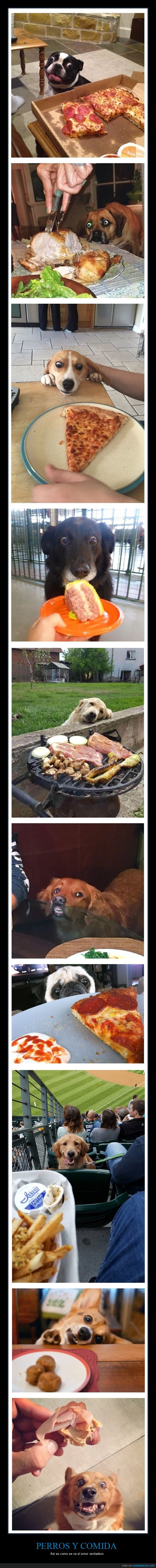 caras,comida,perros