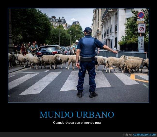 ciudad,ovejas,policía