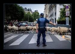 Enlace a Las ovejas toman la ciudad