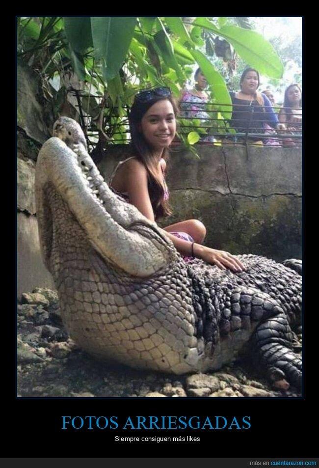 cocodrilo,wtf,zoo